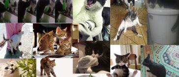 Gatos: comportamientos extraños